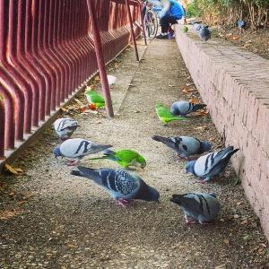cotorras y palomas