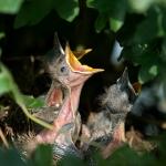 pájaros nido