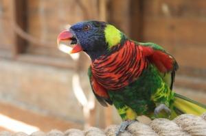 parrot-206322_640